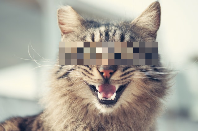 This example applies the pixelation effect with pixel size of 20px to a selected rectangular region in a JPG picture of a smiling cat. Area outside of the selected region is not pixelated.