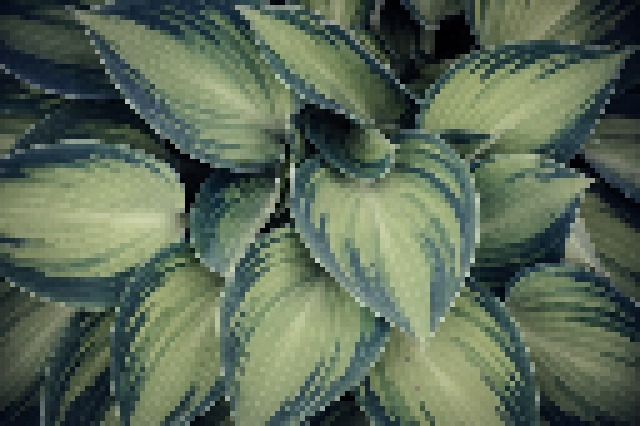 This example applies the pixelation effect to the whole JPEG graphic image of a green fern instead of a selected region and uses pixelation size of 5.