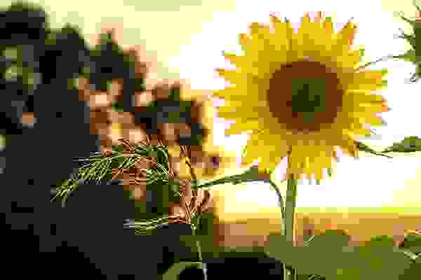 In this example, we load a JPG picture of a sunflower and set the compression quality to 0. This way, the output JPG is almost unrecognizable and is pretty much made only out of compression artifacts.